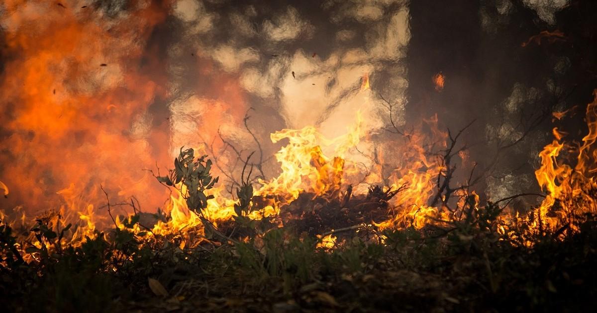 Минлеса Приангарья отказалось тушить пожары рядом с Витимским заповедником - Верблюд в огне