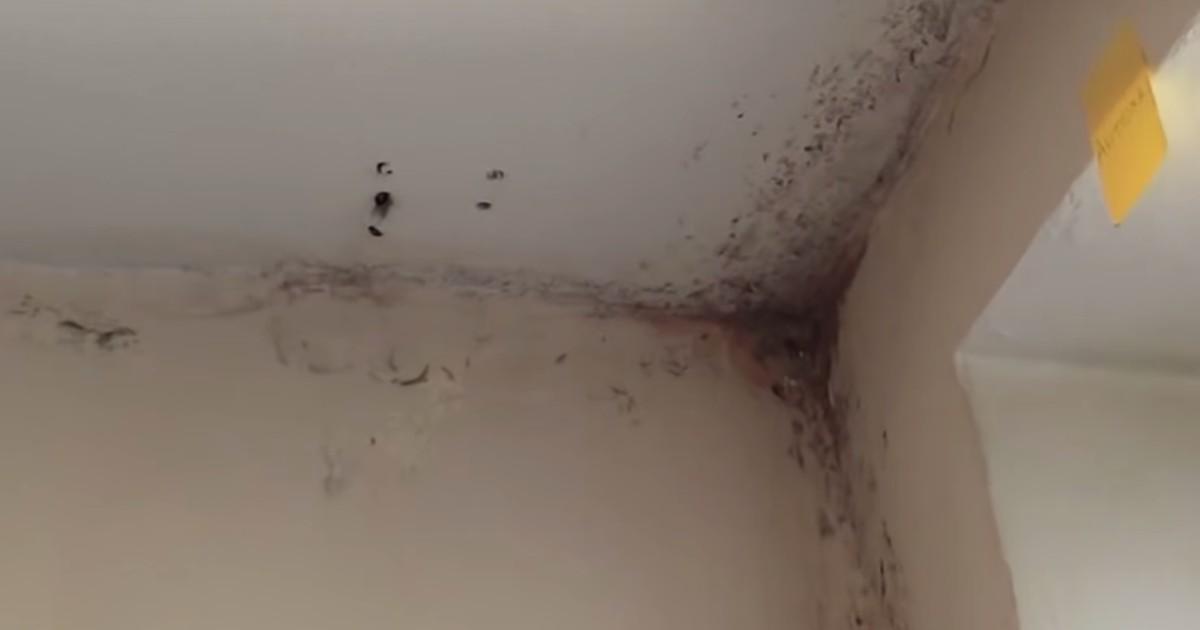 Плесень, тараканы и разруха. Студенты БГУ показали бытовые условия в общежитии