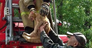 Сотрудники МЧС в Усолье-Сибирском спасли кота, просидевшего на дереве 8 дней