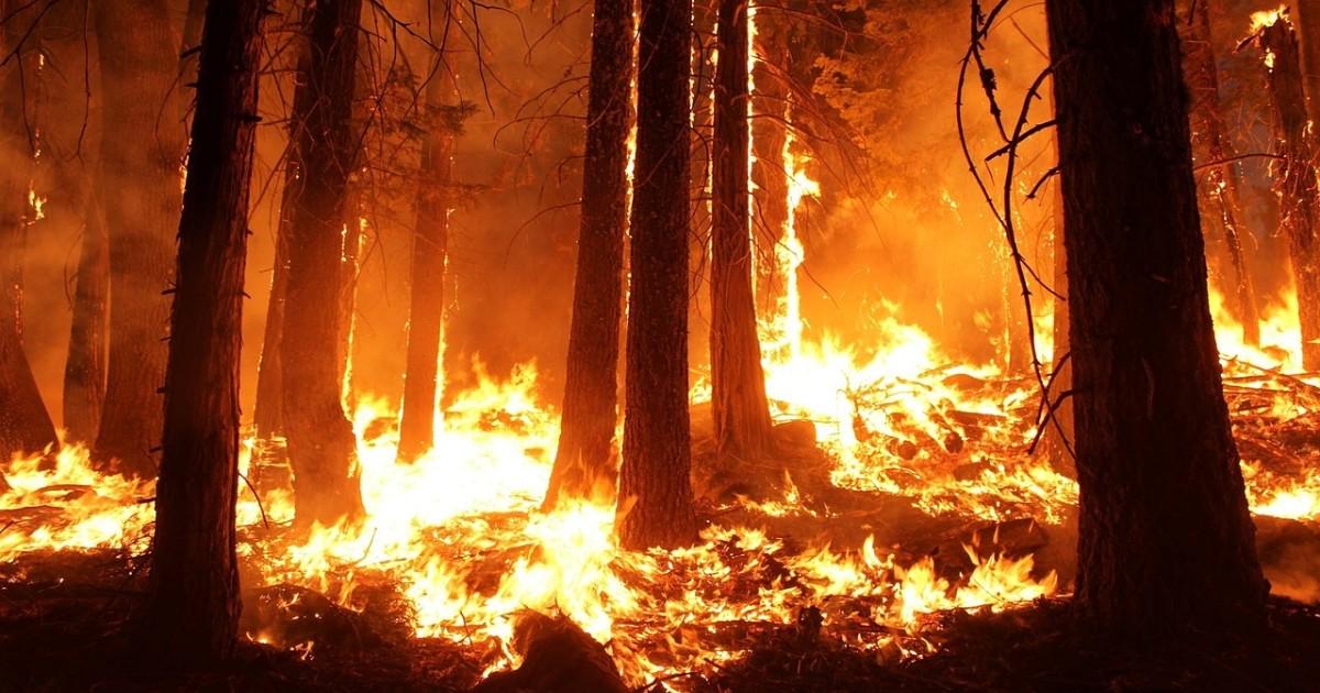 Житель Боханского района устроил лесной пожар, бросив окурок в траву.