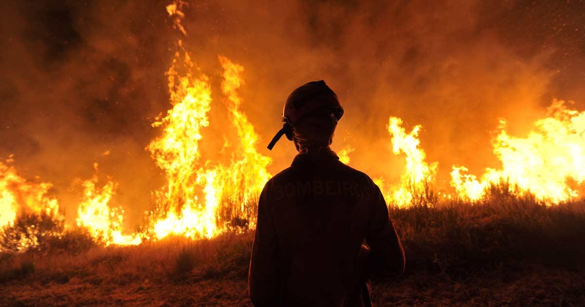 В огне уже более 3 млн га сибирского леса. Почему пожары не тушат и что будет дальше?