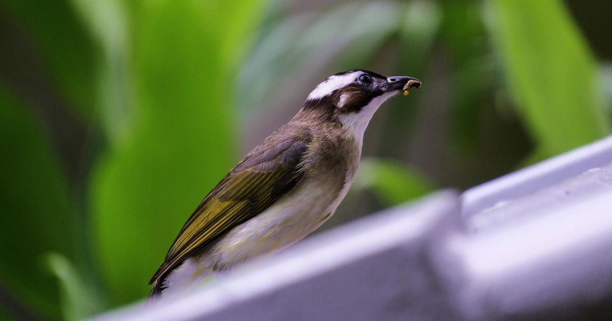 Иркутский Ботсад проведет экскурсию о ночной жизни птиц
