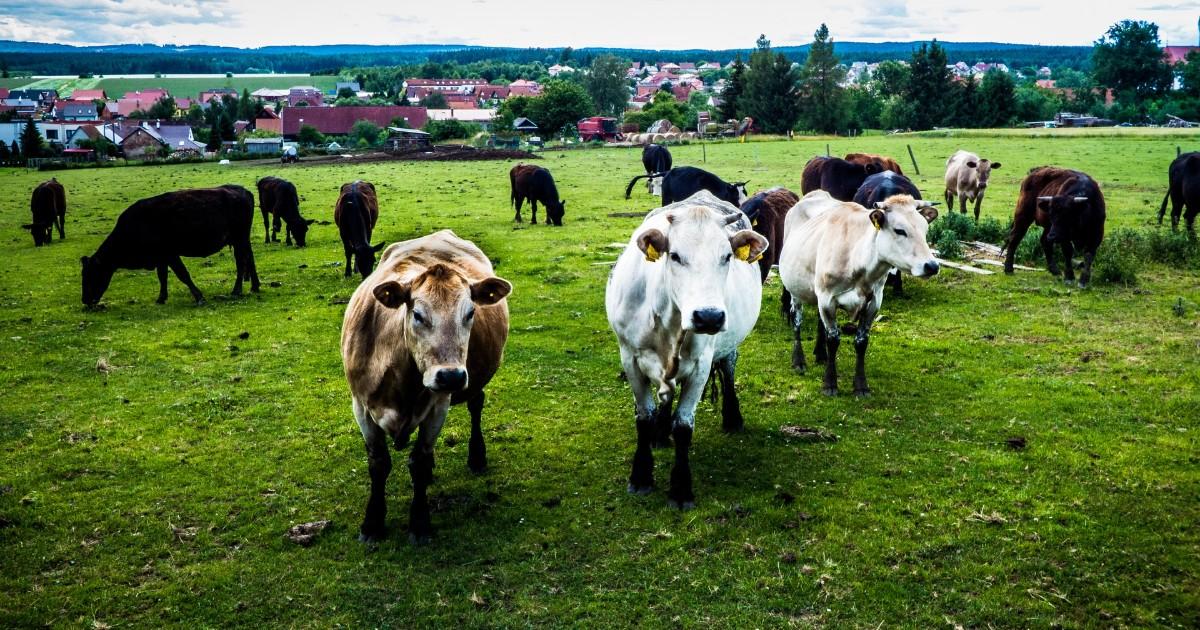 Семейная ферма из Иркутской области стала лучшей в стране