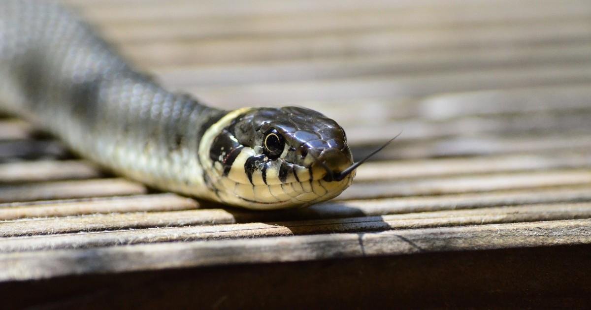 Затопленный район Иркутской области атаковали ядовитые змеи