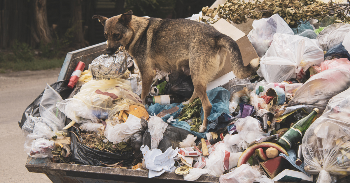 Город завалило мусором. Почему так происходит?