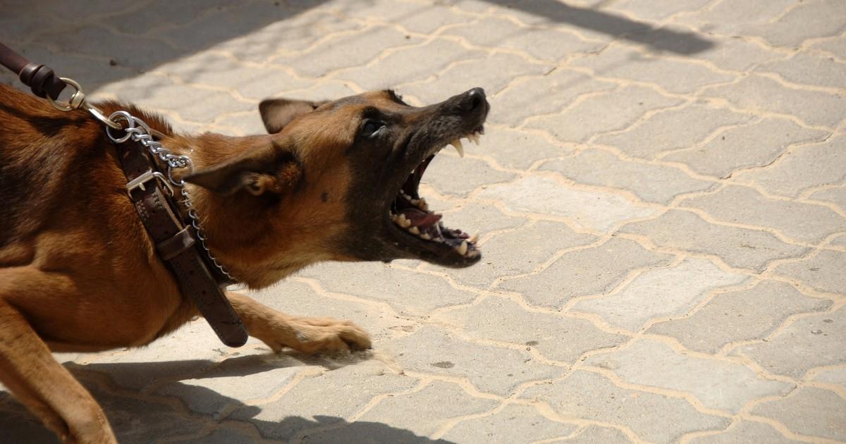 Активисты предложили арестовывать россиян за выгул опасных собак без намордника
