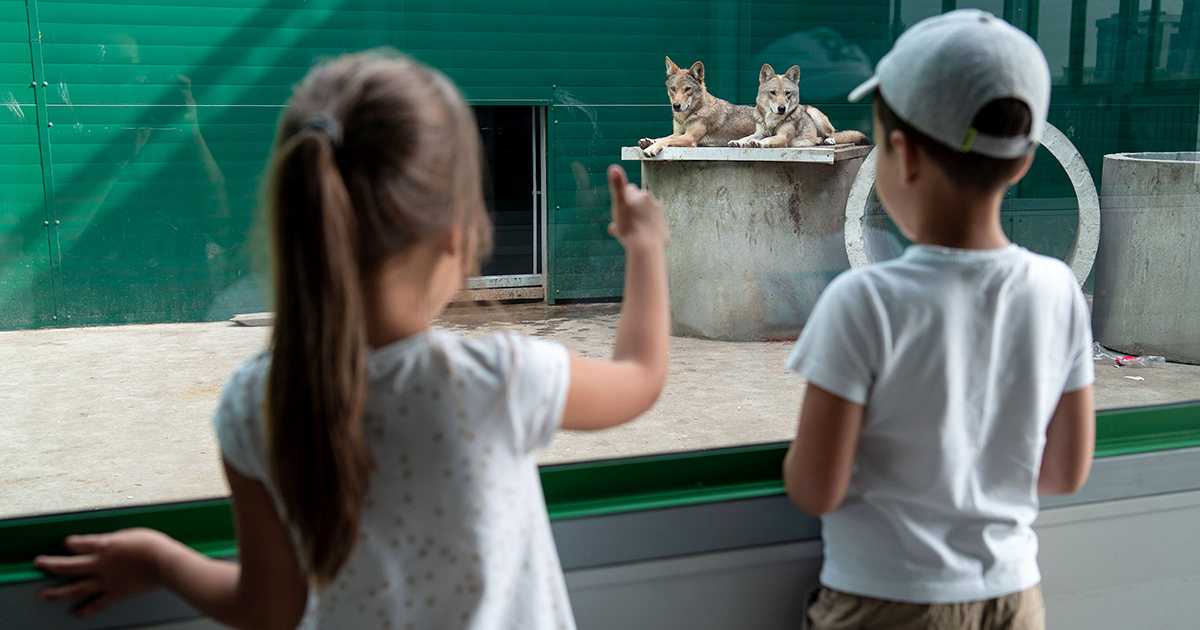 Фоторепортаж: куда переехала Иркутская зоогалерея