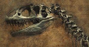 Иркутские ученые нашли 70-килограммовую кость динозавра