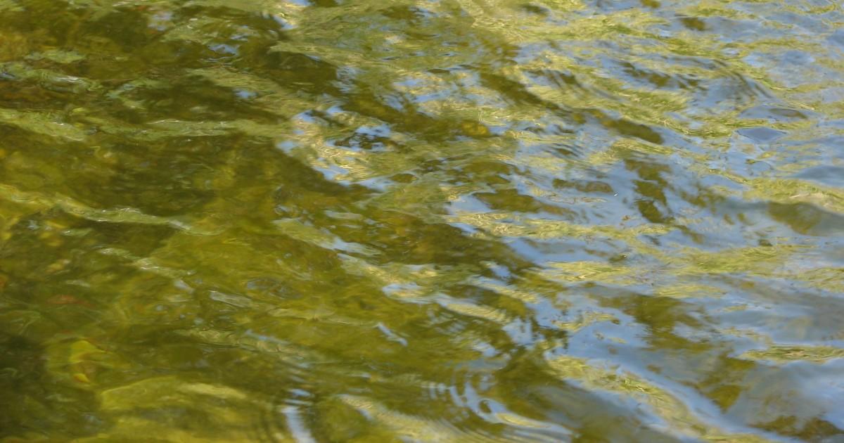 Жителей Иркутской области попросили кипятить холодную питьевую воду. Она не соответствует требованиям СанПиН - Верблюд в огне