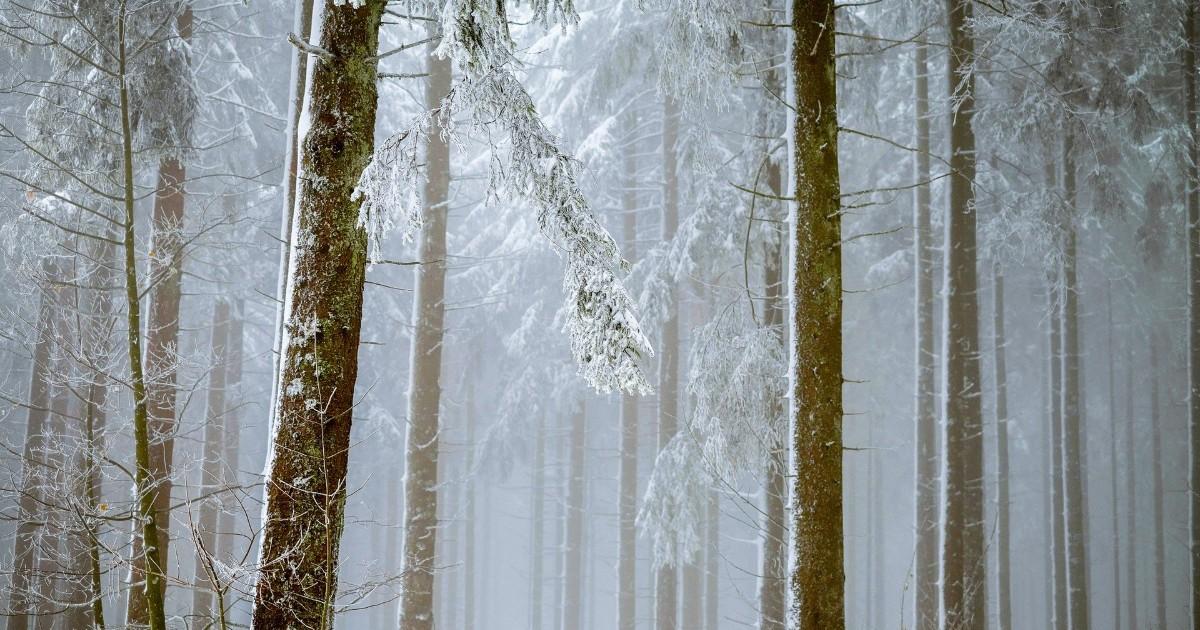 Минприроды установило границы зеленого пояса Иркутска. Это самый крупный лесопарковый пояс в стране