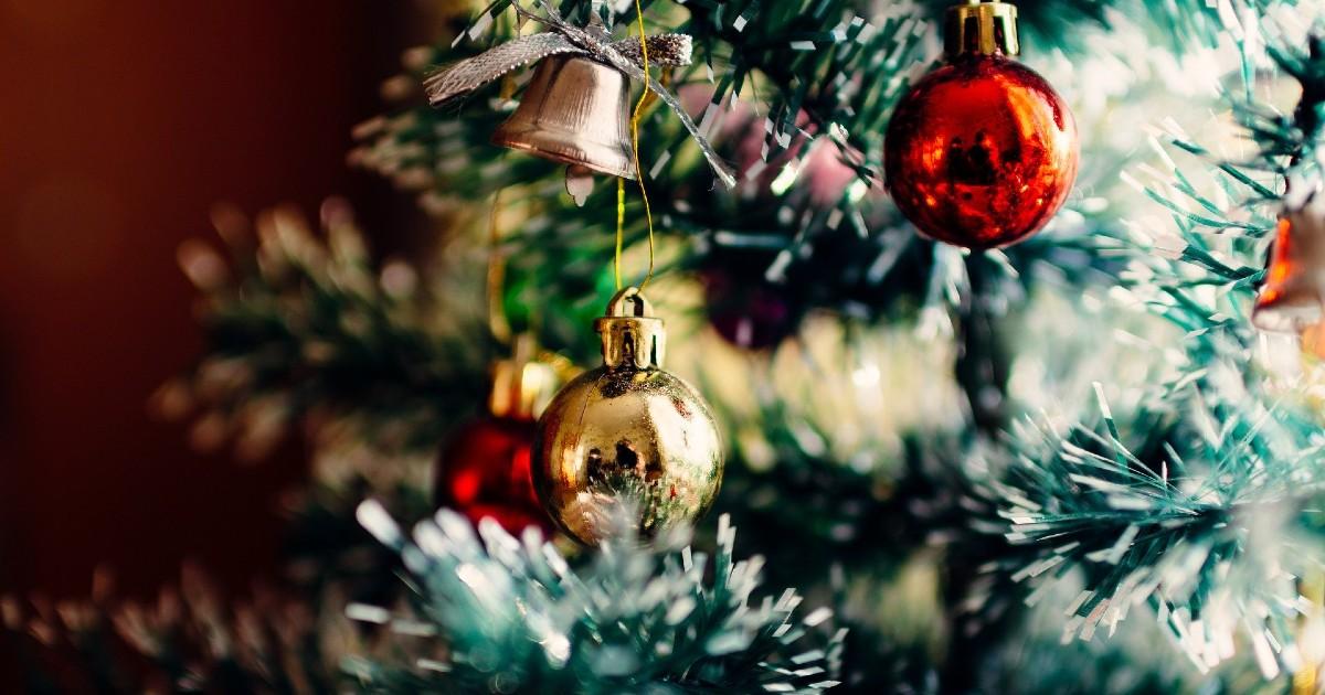 Иркутский зоосад собирает новогодние елки для животных. Сдать дерево может каждый житель города - Верблюд в огне