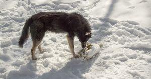 В Иркутске бродячие собаки покусали 8-летнюю девочку - Верблюд в огне