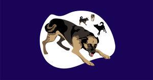 Если друг оказался вдруг враг. Как спастись от бродячих собак?