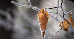 Снег и ветер: синоптики рассказали, какая погода будет в Приангарье на выходных