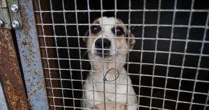 Больные животные, петиция на 40 тыс. подписей и обвинения в рейдерском захвате. Разбираемся в скандале вокруг приюта «Пять звезд» - Верблюд в огне