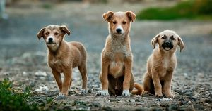 Список: куда можно отнести вещи для собак из иркутского питомника «К-9» - Верблюд в огне