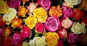 В Иркутской области депутаты хотят купить цветы на 600 тыс. рублей из бюджета
