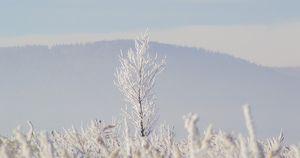 Иркутские синоптики рассказали, какая погода будет перед Новым годом