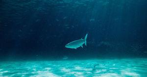 Ученые воссоздадут подводный мир Байкала в виртуальной реальности