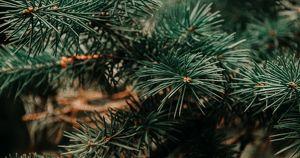 Возможность: сдать новогоднюю елку на корм животным - Верблюд в огне