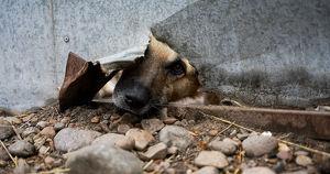 В Приангарье после проверки приюта «Пять звезд» возбудили уголовное дело