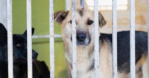 Предложение дня: создать приюты для животных на федеральные средства