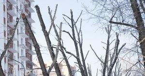 «Городская среда» похвасталась, как красиво обрезала деревья. Иркутяне не оценили