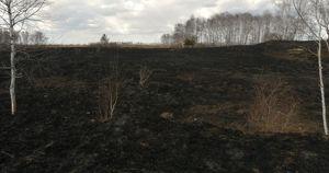 Житель Приангарья поджег лес после того, как не смог остановить попутку
