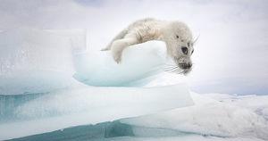 Фото дня: снимки с Байкала для конкурса National Geographic