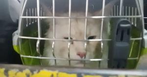 Видео: кот сбежал с самолета в аэропорту Иркутска