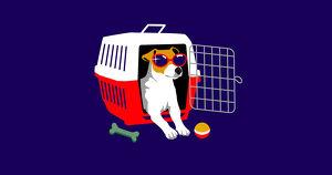 Как подготовить кошку или собаку к летнему отпуску. 5 советов от ветеринаров и зоопсихологов