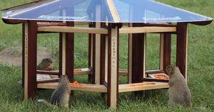 В Красноярске открыли паб для сусликов