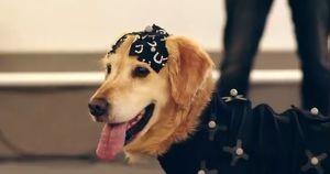 Для игры по «Стражам галактики» оцифровали настоящего пса. Посмотрите, как он веселился